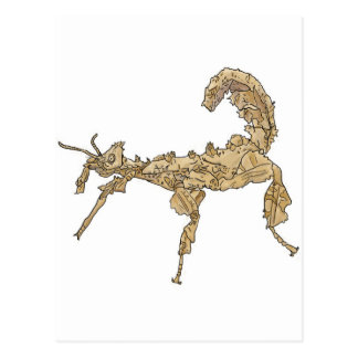 Drawing of Australian Stick Insect Post Cards