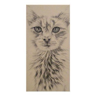 Drawing of White Cat on Photo Card