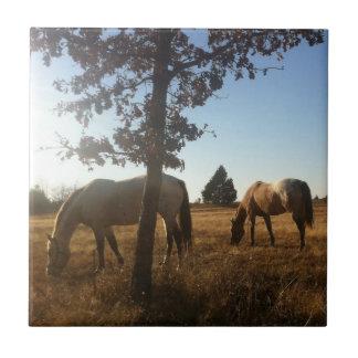 Dream Catcher Ranch s Appaloosa Mares Ceramic Tile