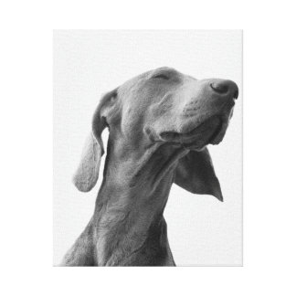 Dreaming dog canvas print
