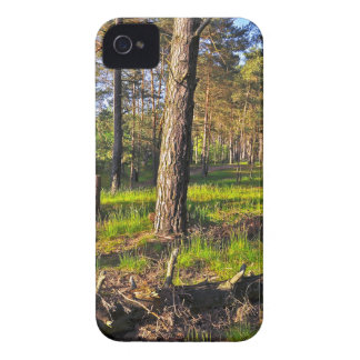 Dreaming Pine Trees into the Evening Light Case-Mate iPhone 4 Case