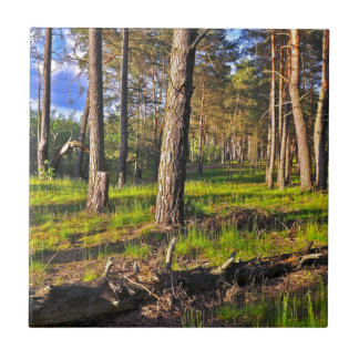 Dreaming Pine Trees into the Evening Light Ceramic Tile