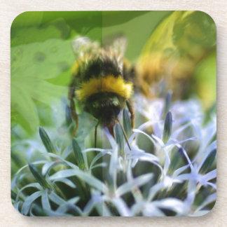 Dreams of the bee coaster