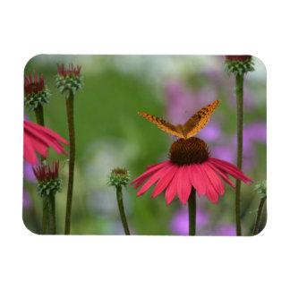 Dreamy Butterfly On Coneflower Magnet