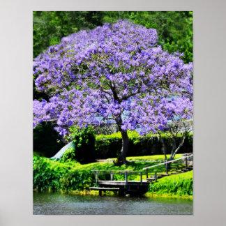 Dreamy Jacaranda-Purple Flowered Tree on Lake Poster