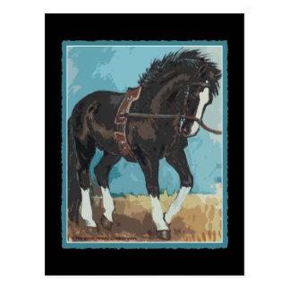 Dressage Horse Working on Lunge Line Equine Art Postcard