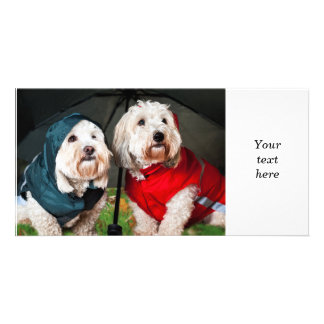 Dressed up dogs under umbrella personalized photo card
