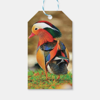 dressed up Duck Gift Tags