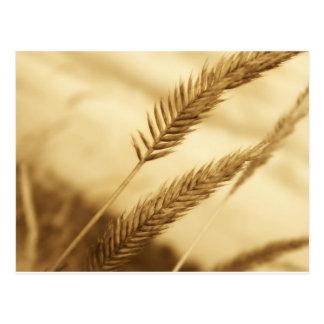 Drew Sullivan - Prairie Grass Post Cards