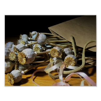 Dried Flower Poppy Pods Poster