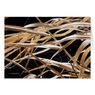 Dried Grasses Greeting Card