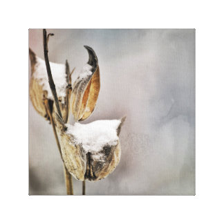 Dried Milk Weed Pods in Winter Grunge Style Photo Canvas Print