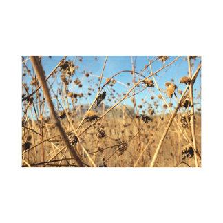 Dried sunflowers canvas print
