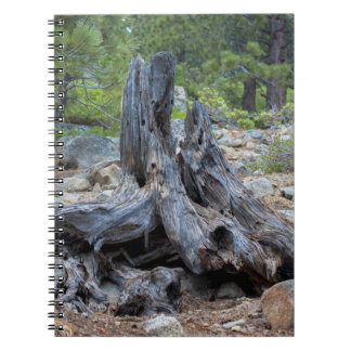Dried Tree Trunk In The Forest Spiral Note Book