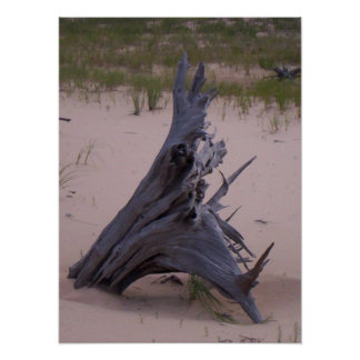 Drift Wood Poster
