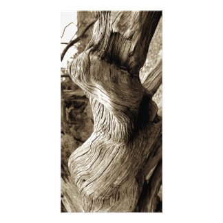 Driftwood 1 picture card