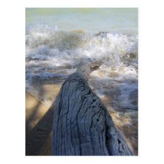 Driftwood and waves postcard