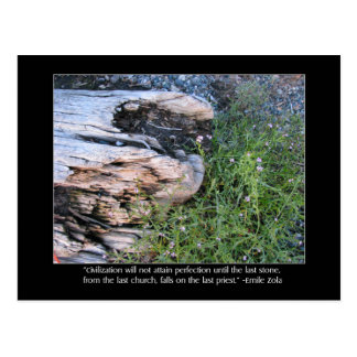 Driftwood and Zola Quote Postcard