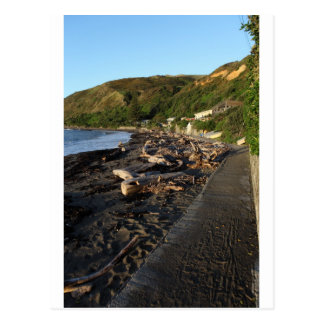 Driftwood beach Pukerua Bay New Zealand Postcard