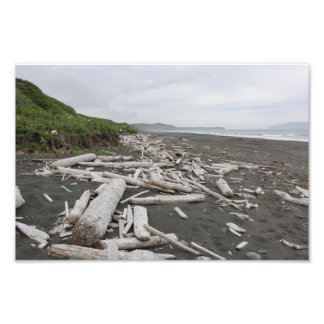 Driftwood in Kodiak Photo Print