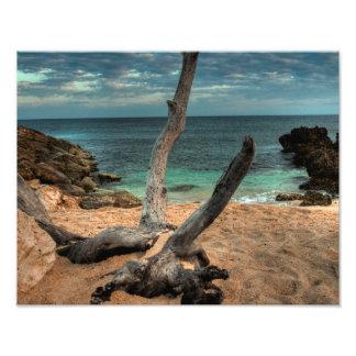 Driftwood on a Beach in Jamaica Photograph
