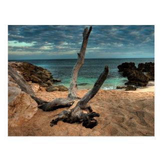 Driftwood on a Beach in Jamaica Postcard