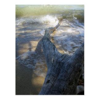 driftwood on shore postcard