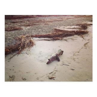 Driftwood on Sullivans Island Postcard