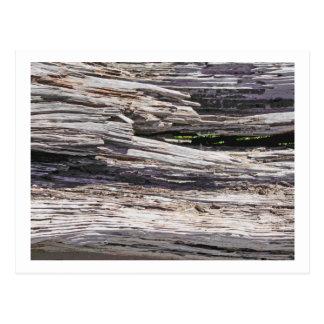 Driftwood photo painting postcard
