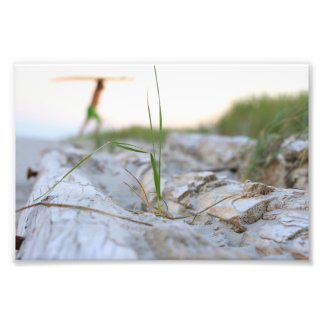 Driftwood Photo Print