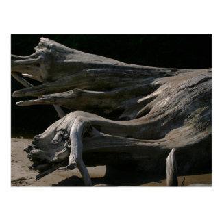 Driftwood Stump Postcard