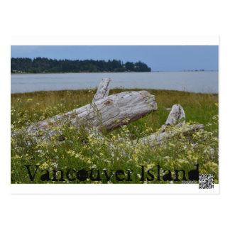 Driftwood Vancouver Island postcard