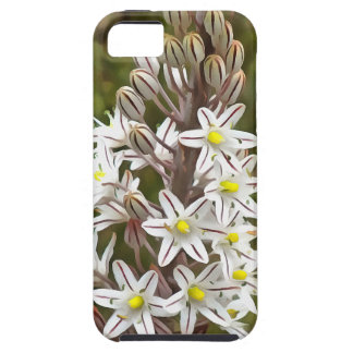 Drimia Maritima iPhone 5 Cases