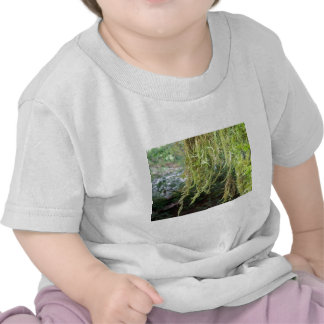 dripping vines along the river shirts