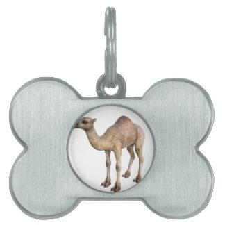Dromedary Camel Pet Tag