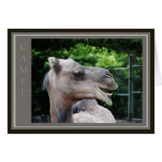 Dromedary Camel Wildlife Card