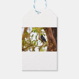 DRONGO BIRD RURAL QUEENSLAND AUSTRALIA GIFT TAGS