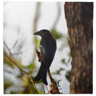 DRONGO BIRD RURAL QUEENSLAND AUSTRALIA NAPKIN