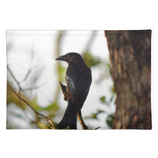 DRONGO BIRD RURAL QUEENSLAND AUSTRALIA PLACEMAT