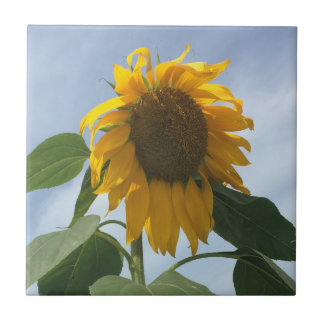 Droopy Sunflower Small Square Tile
