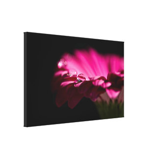 Drop of Water on Gerbera Gallery Wrapped Canvas