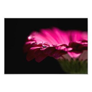 Drop of Water on Gerbera Art Photo