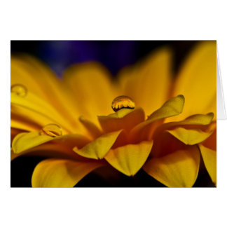 Drop of Water with Reflection of Gerbera Daisy Greeting Card