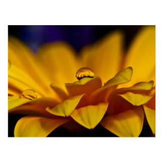 Drop of Water with Reflection of Gerbera Daisy Postcard