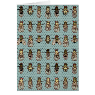 Drosophila Fruit Fly Genetics Card
