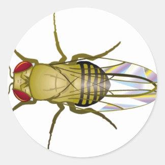 drosophila melanogaster classic round sticker