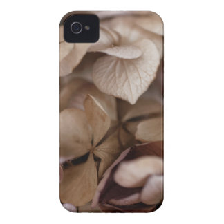 Dry Flowers iPhone 4 Covers