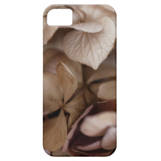 Dry Flowers iPhone 5 Covers
