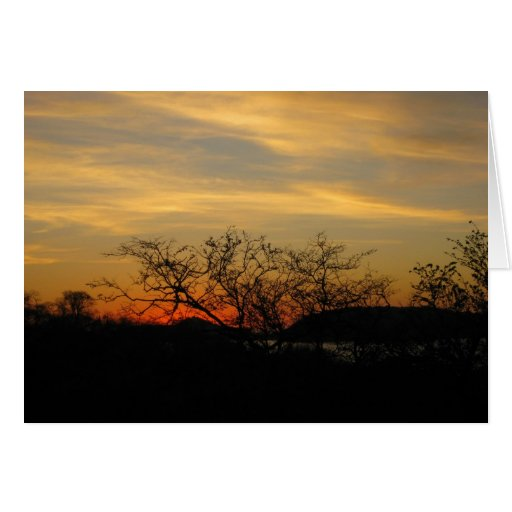 Dry Forest Sunset Note Card