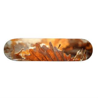 Dry leaf skateboard